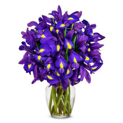 Fresh Irises in Vase
