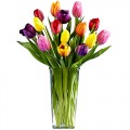 Rainbow Collection: Multicolored Tulips in Vase