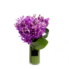 Mother's Day Collection: ETERNITY LOVE COLLECTION: Fresh Orchids Vase Arrangement