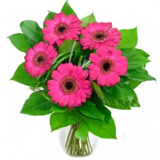 Mozart Collection: Pink or Red Gerbera Daisies vase arrangement