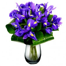 Mozart Collection: Iris vase arrangement