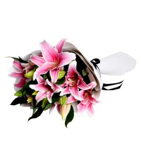Coco Collection: Pink Lilies