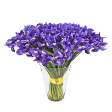 Thinking of You: Irises in Vase Collection