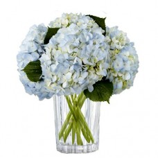 Sweet Clouds: Blue Hydrangea